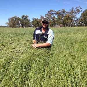 Wicher Ryegrass from Bell Pasture Seeds
