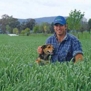 Bell Pasture Seeds Ryegrass Atomic