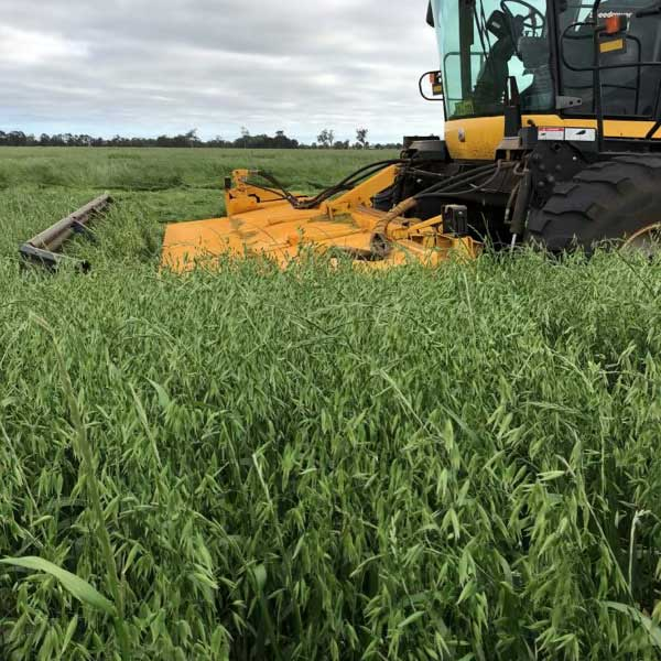 BPS Oat and Ryegrass Mix